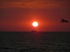 Traghetti Civitavecchia-Golfo Aranci