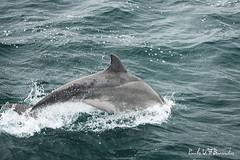 Santuario in difesa dei cetacei